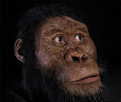 Quá bất ngờ diện mạo tổ tiên lâu đời nhất loài người