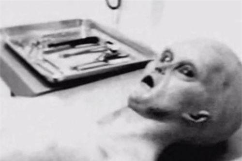 Sinh vật lạ nghi là người ngoài hành tinh trong bức ảnh mà Tom Carey công bố.