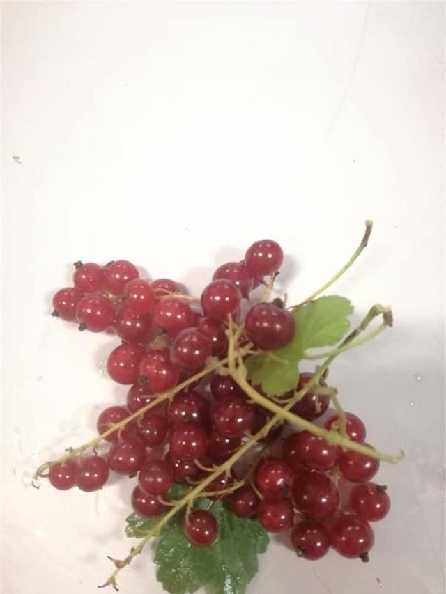 Nho chuỗi ngọc 2 triệu đồng/kg: Cây bụi mọc đầy rừng, ăn chua loét - 2