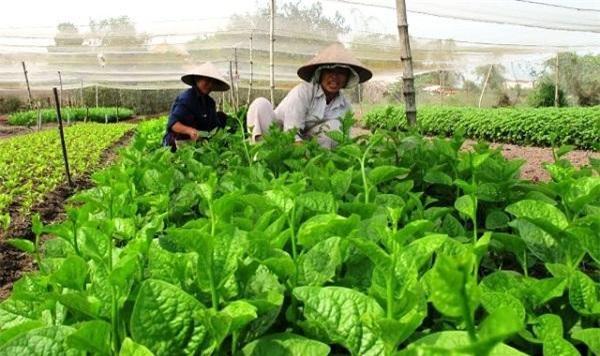 Nông nghiệp công nghệ cao là con đường tất yếu để tăng khả năng cho doanh nghiệp Việt. cạnh tranh.