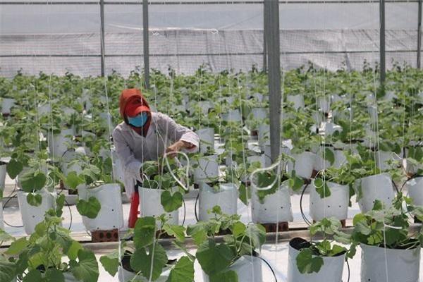 Phát triển nông nghiệp ứng dụng công nghệ cao là hướng đi đúng và tất yếu, đã và đang tạo động lực mới cho ngành nông nghiệp Việt Nam trong bối cảnh hội nhập quốc tế, biến đổi khí hậu và cách mạng công nghiệp lần thứ tư.