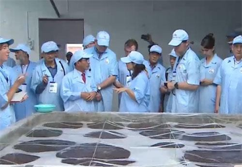 Tham quan thực tế quy trình sản xuất tôm sạch Việt Úc