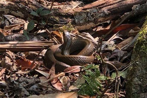 CLIP HOT (18/9): Khu rừng lúc nhúc các loài rắn độc ở Lai Châu, vẻ ngoài 'hút hồn' của nữ DJ 'hot' nhất nhì Hàn Quốc