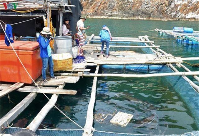 Khám phá nghề nuôi cá lồng bè thu tiền tỷ ở Nam Du - Ảnh 11.
