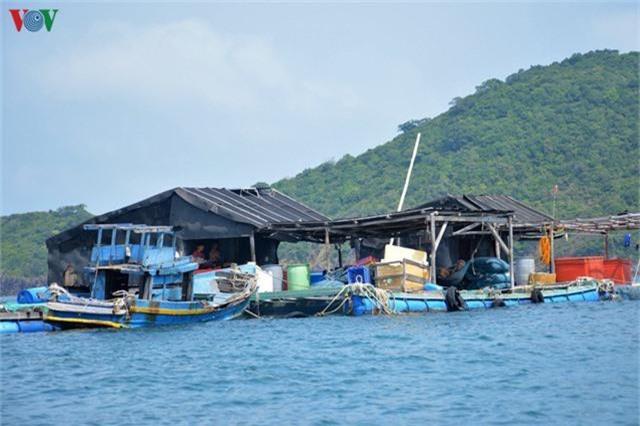 Khám phá nghề nuôi cá lồng bè thu tiền tỷ ở Nam Du - Ảnh 12.