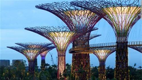 Siêu cây khổng lồ tạo 'thành phố trong vườn' ở Singapore - 4