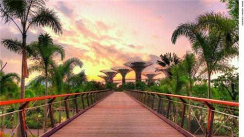 Siêu cây khổng lồ tạo 'thành phố trong vườn' ở Singapore - 5