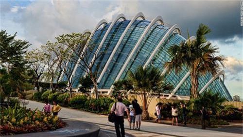 Siêu cây khổng lồ tạo 'thành phố trong vườn' ở Singapore - 6
