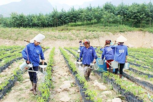Nông nghiệp Mường La đang tạo sức bật nhờ sản xuất an toàn