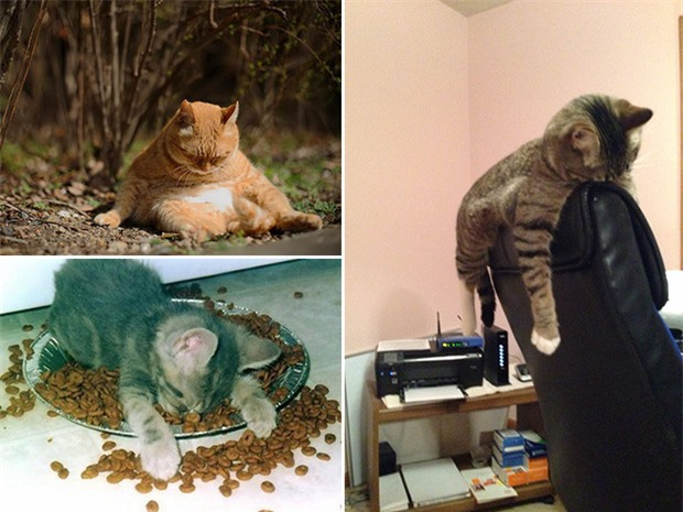 Tuyển tập những hình ảnh say xỉn bê tha giống hệt con người của mấy ông động vật hoang dã - Ảnh 3.