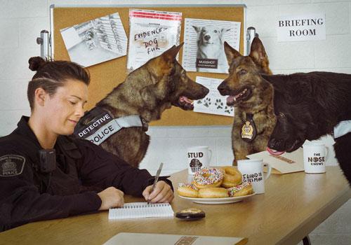 Mới đây, nhiếp ảnh gia Jason Krygier và Sở Cảnh sát Waterloo, Canada đã hợp tác, cho gia đời những hình ảnh vô cùng ấn tượng về những chú chó nghiệp vụ.