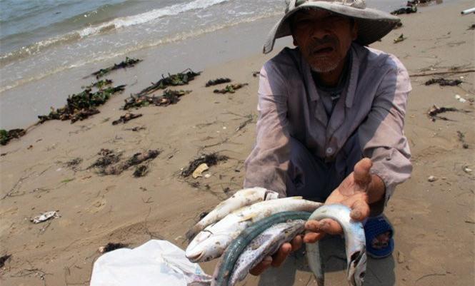 Công bố nguyên nhân, đối tượng gây ra vụ cá chết vào ngày 29/6.