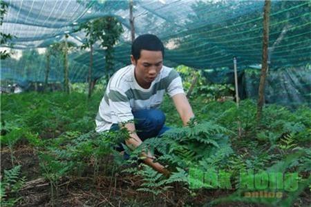 """Mỗi tháng """"đút túi"""" 35 triệu đồng nhờ trồng dương xỉ lấy lá"""