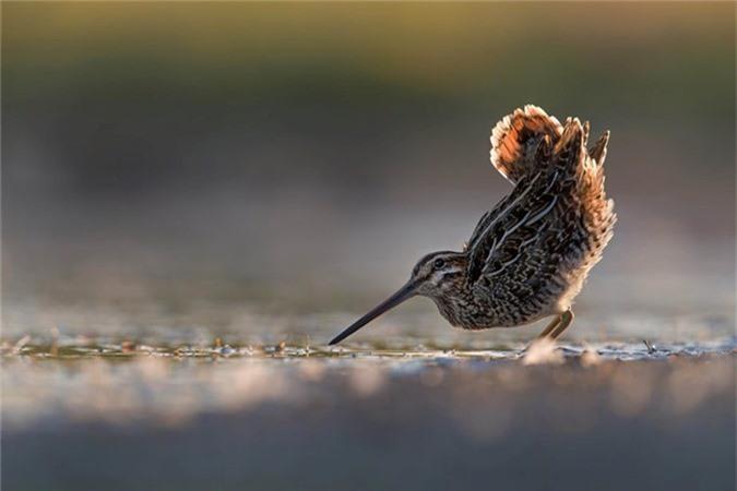 Nhung buc anh ve loai chim dep nhat nam 2018-Hinh-5