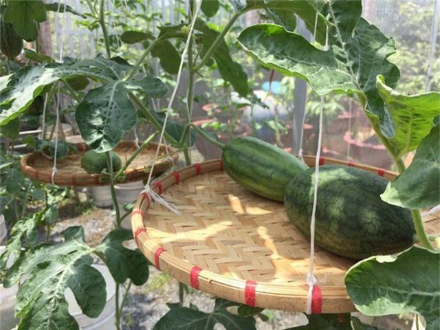 Bắt đầu ý tưởng trồng rau trên sân thượng từ năm 2012, anh Thuyên cho biết ngoài việc phục vụ đam mê thì lý do trồng rau còn bắt nguồn từ thông tin về tình trạng rau phun thuốc kích thích, không đảm bảo vệ sinh an toàn thực phẩm trên thị trường. So với việc trồng rau dưới đất, thì trồng rau trên sân thượng khó hơn nhiều, đòi hỏi việc chăm sóc thường xuyên hơn. Ngoài trồng dưa lưới, anh Thuyên còn trồng dưa hấu dưới khu vườn mặt đất và cũng áp dụng phương pháp trồng bán thủy canh.