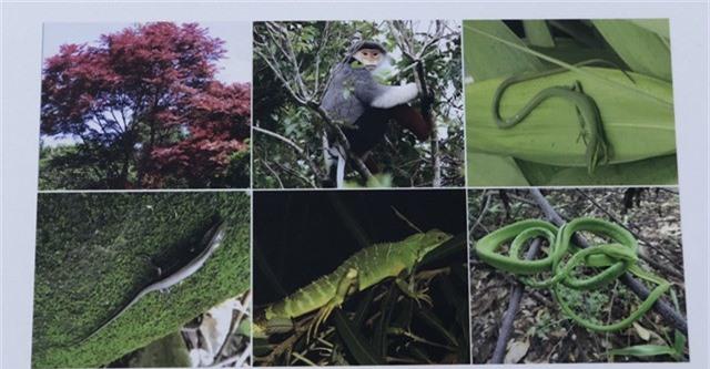 Đà Nẵng đặc biệt sở hữu hệ sinh thái đa dạng với rừng nguyên sinh bao quanh đô thị trẻ