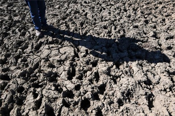 """Chính quyền bang New South Wales tuyên bố vào hôm 8/8 rằng 309.000 dặm vuông tại tiểu bang này đều bị hạn hán nghiêm trọng. ÔngNiall Blair, Bộ trưởng Bộ công nghiệp cho biết người nông dân tại đây đang phải chịu đợt hạn hán nặng nề nhất so với các vùng khác thuộc Nam bán cầu. Ông nói: """"Điều này thực sự rất khó khăn. Không có người dân nào trong khu vực mà không dài cổ ngóng mưa rơi xuống""""."""