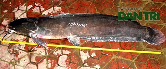 Con cá có chiều dài đo được là 1,2m.