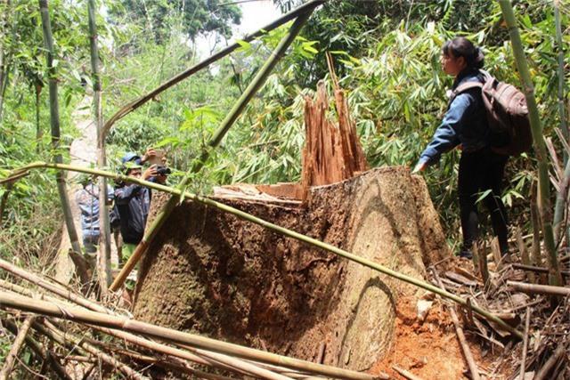 Khu vực xảy ra vụ phá rừng lim ở huyện Nam Giang