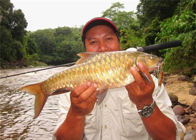 Cá Empurau ưa nước lạnh, sạch và với lượng oxy hòa tan đầy đủ. Ảnh picssr.