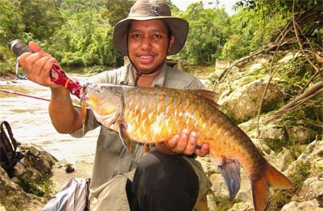 Cách chế biến cá Empurau phổ biến nhất là hấp. Ngoài ra, cá còn thể nấu thành món cà ri. Ảnh staticflickr.