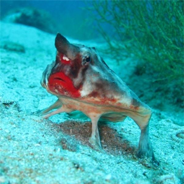 Một con cá môi đỏ