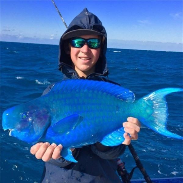 Một loài cá màu xanh