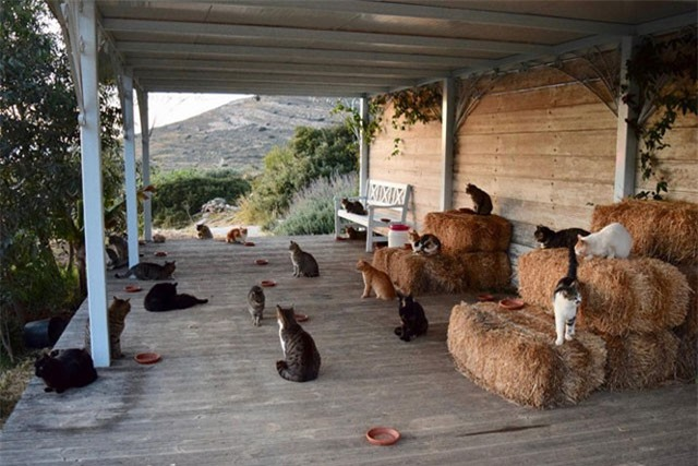 Trung tâm cứu hộ mèo trên đảo Syros ở Hy Lạp.