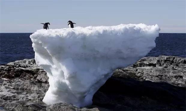 Chim cánh cụt trên tảng băng trôi