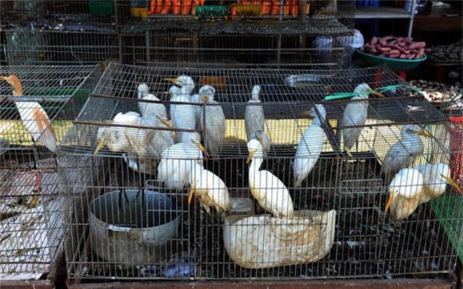 Vì sao khó xử lý chợ chim Thạnh Hóa - ảnh 3