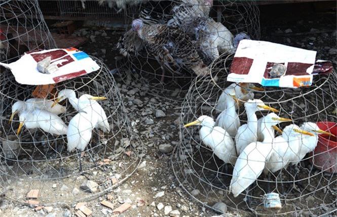 Vì sao khó xử lý chợ chim Thạnh Hóa - ảnh 4
