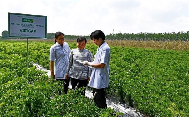 Hộ nông dân Bùi Thị Ngọc Sương (huyện Củ Chi, TP.HCM) đang thực hiện trồng ớt theo mô hình VietGAP dưới sự hướng dẫn của các kỹ sư nông nghiệp và nhân viên UNIBEN (áo trắng).