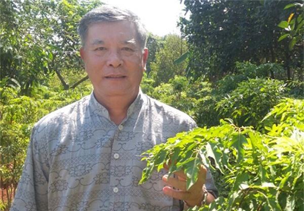 Ông Trần Văn Xuân (ngụ KP.1, thị trấn Gia Ray, huyện Xuân Lộc) có thu nhập cao từ gần 1 ngàn cây đinh lăng. Ảnh: H. Đình