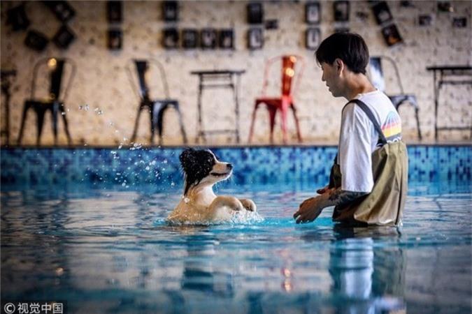 """Cách đây 4 năm, Zhu Tianxiao, 31 tuổi, thất nghiệp và sống với bà ngoại. Tuy nhiên, cuộc đời hoàn toàn thay đổi sau khi anh nhận nuôi chú chó Sylar giữa những tháng ngày tưởng như bế tắc nhất. """"Sylar đã làm thay đổi cuộc sống của tôi nên tôi sẽ dành cho nó tất cả những gì tôi có"""", Zhou nói với phóng viên China Daily."""