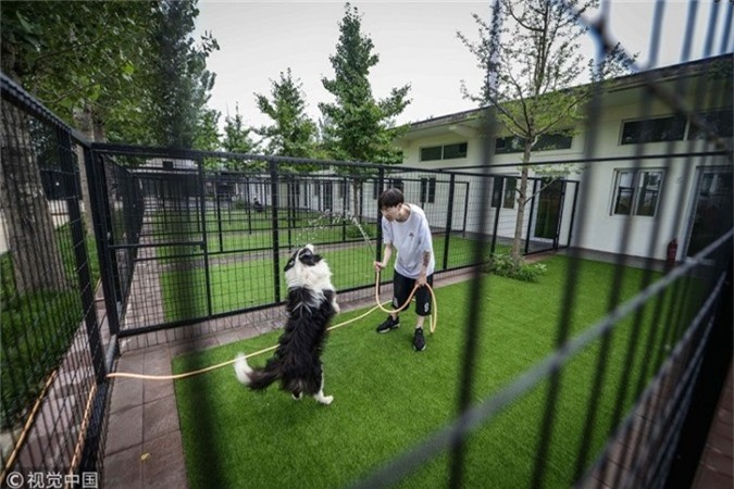 Khi nuôi Sylar, ban đầu anh xem các video trên YouTube về cách huấn luyện chó chuyên nghiệp. Bằng các kỹ thuật học được, anh đã dạy Sylar biết đập tay, giả chết, đi bộ như người và nhảy trên bàn. Zhou sau đó quay video và chia sẻ trên mạng. Video về Sylar dần chiếm được cảm tình của cư dân mạng và chú chó thông minh của Zhou trở thành một ngôi sao trên mạng xã hội với hàng triệu lượt xem và hàng trăm nghìn người theo dõi (follow).