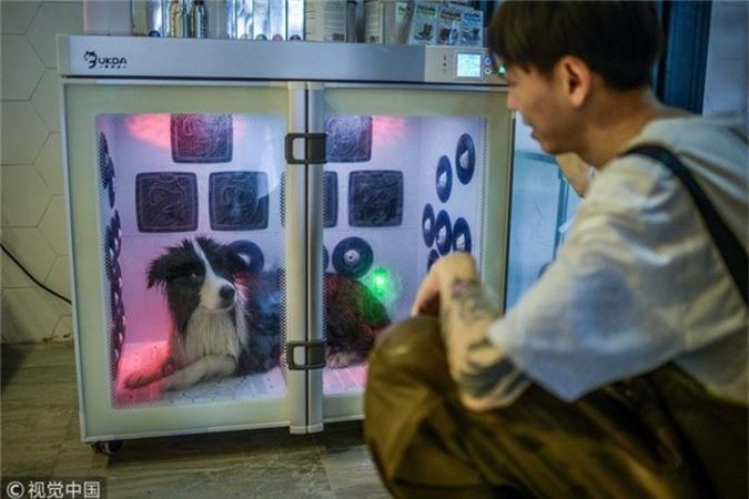 Biệt thự của Sylar được mở cửa đón tiếp khách vào hồi tháng 5 để những chú chó khác cũng có thể trải nghiệm cảm giác sống trong nơi xa xỉ. Bằng cách chi một khoản phí, những chú chó có thể ngủ trong các phòng máy lạnh với những chiếc gối khổng lồ và sân riêng. Khách hàng có nhu cầu sẽ chi 175 tệ (26 USD) để những con vật cưng tắm trong bồn hoặc mát-xa nhẹ nhàng với giá 400 tệ (58 USD).