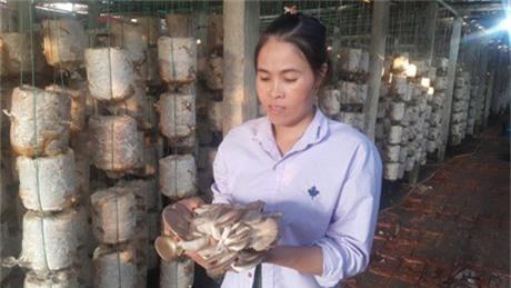 Nam Định: Mỗi năm kiếm hơn nửa tỷ nhờ trồng nấm sạch - 1