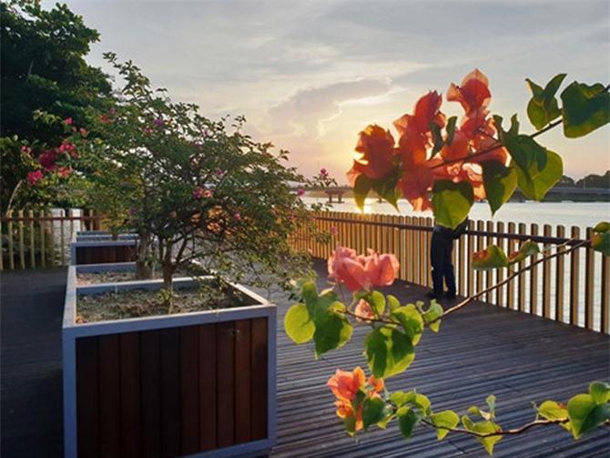 Hoa và cây cảnh trang trí trên đường đi bộ dọc sông Hương
