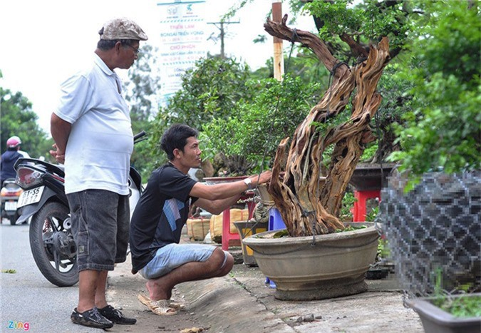 Goc vu sua ky quai gia 120 trieu o hoi thi bonsai hinh anh 1