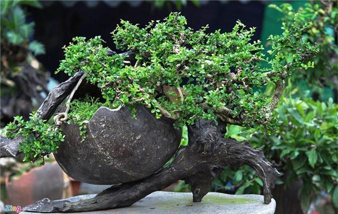 Goc vu sua ky quai gia 120 trieu o hoi thi bonsai hinh anh 5