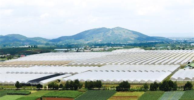 Lâm Đồng kiểm tra, rà soát để thu hồi một số diện tích đất công cho thuê nhưng sử dụng không đúng quy định (Ảnh: VH)