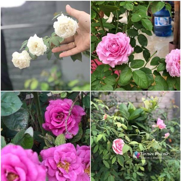 """Chuyển hàng tấn đất làm ao sen, trồng hồng trên sân thượng, mẹ HN xây """"thiên đường"""" phủ kín hoa - 16"""