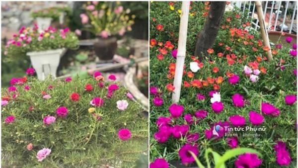 """Chuyển hàng tấn đất làm ao sen, trồng hồng trên sân thượng, mẹ HN xây """"thiên đường"""" phủ kín hoa - 8"""