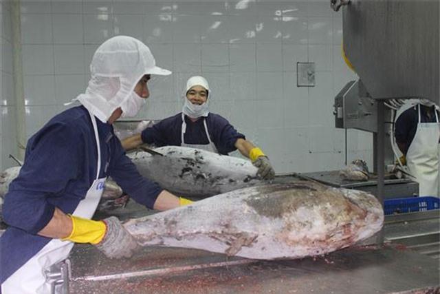 o sức cạnh tranh còn hạn chế, cá ngừ của Việt Nam XK sang Mỹ chưa tăng trưởng. Ảnh: T.H