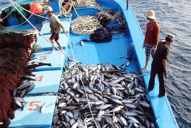 Việc khai thác thủy sản trái phép đã giảm đáng kể nhờ những biện pháp quyết liệt.