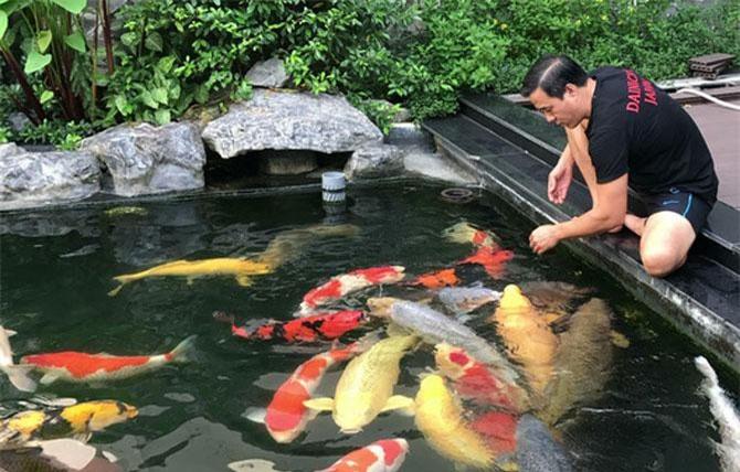 Doanh nhân Ngô Văn Thắng và hồ cá Koi của mình.