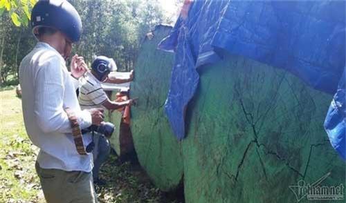 Cổng biệt phủ trăm tỷ xây trái phép của đại gia vàng la liệt gỗ quý. Cổng biệt phủ trăm tỷ xây trái phép của đại gia vàng dưới chân núi Hải Vân có nhiều thân gỗ tròn đường kính 1,5-2 mét được phủ bạt. (CHI TIẾT)
