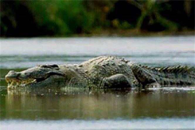 Cá sấu Gustave, dã thú ăn thịt nhiều người nhất ở thời hiện đại - ảnh 3