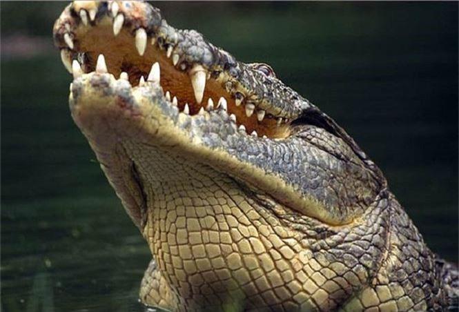 Cá sấu Gustave, dã thú ăn thịt nhiều người nhất ở thời hiện đại - ảnh 4