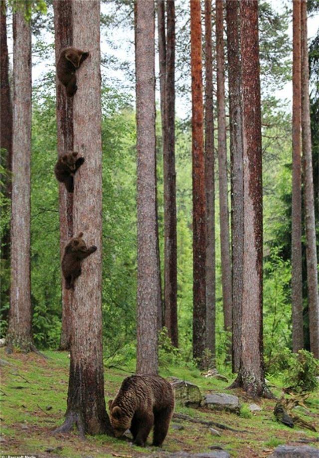 """Bức ảnh của tay máy Valtteri Mulkahainen (Phần Lan) có cái tên khá hài hước """"Gấu mẹ trở về sau cuộc họp phụ huynh""""."""